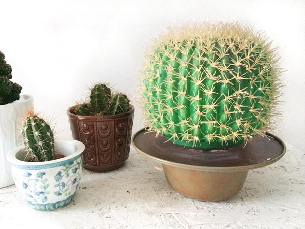 Название колючих растений